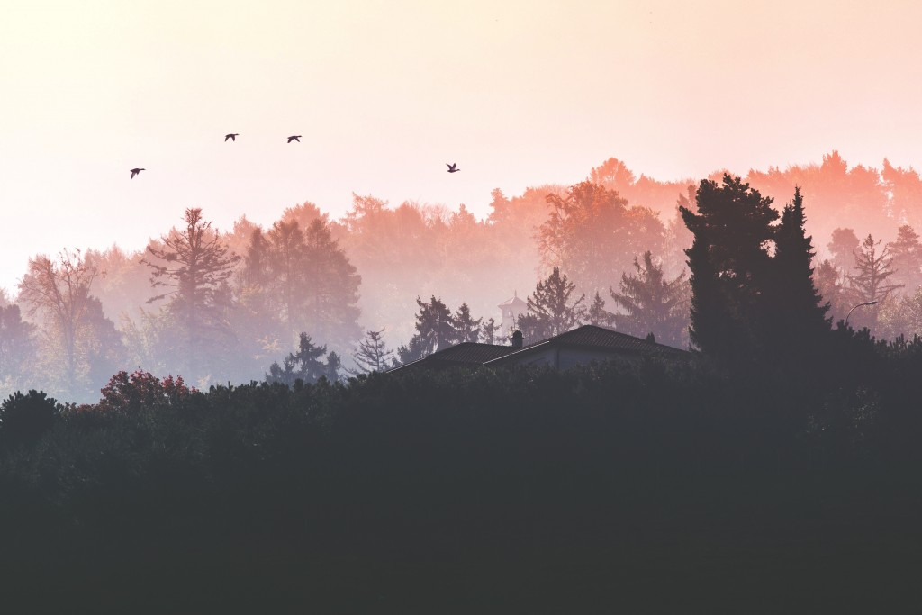 Birds over forest at sunset